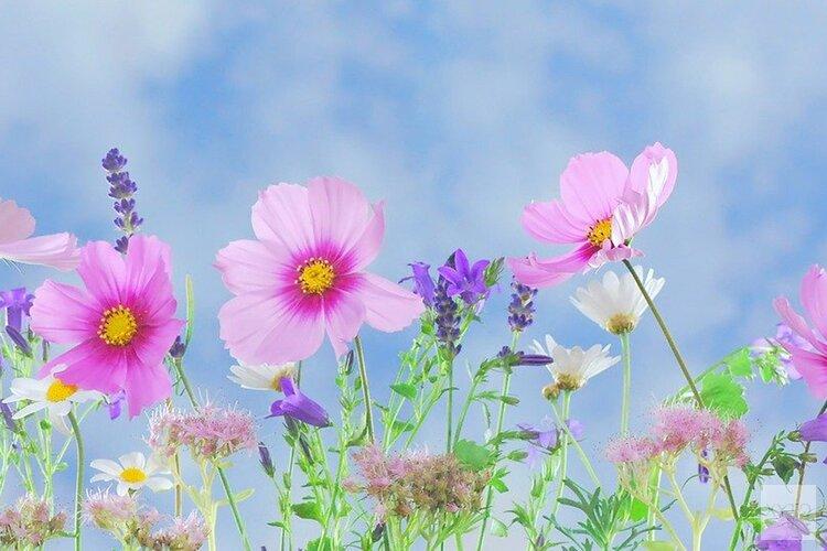 Clusius plantenmarkt online