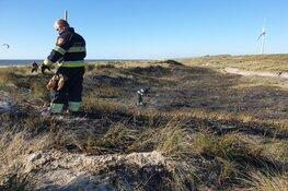 Duinbrand in Velsen-Noord snel onder controle