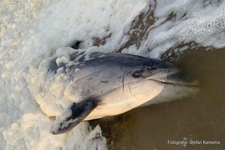 Dolfijn Zafar dood aangespoeld op strand Wijk aan Zee