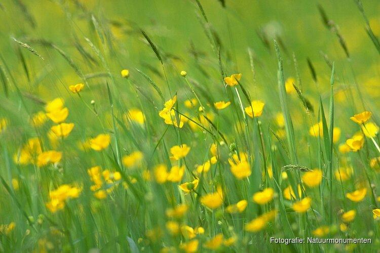Reukgras en bijzondere bloemen in de weides van Beeckestijn