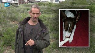 """Hond Maya na 12 dagen herenigd met baasje: """"Ik heb haar terug!"""""""