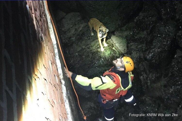 KNRM redt hond na metershoge sprong van Noordpier